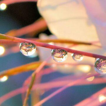 Morning Dew by DAWNESROMEO