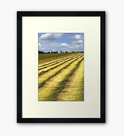Fields of flax 2 Framed Print