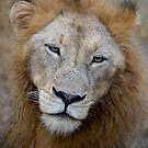Manyaleti Male Lion by Michael  Moss