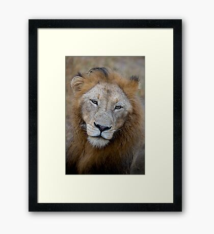 Manyaleti Male Lion Framed Print