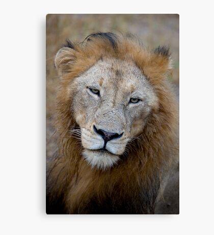 Manyaleti Male Lion Canvas Print