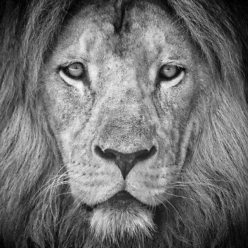 Lion 5716 by tmilovich