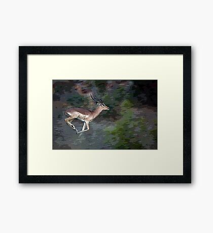 Impala On The Run Framed Print
