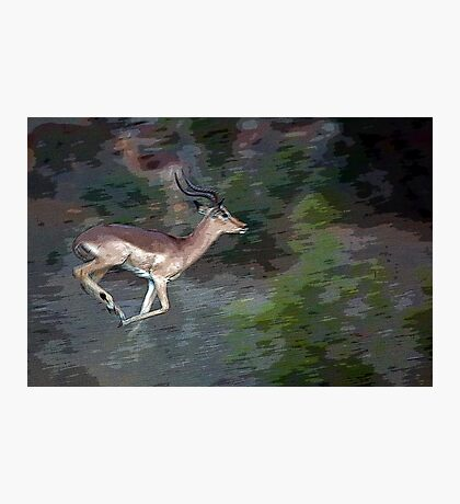 Impala On The Run Photographic Print