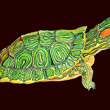 Turtle  by kevinzegers19