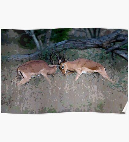 Impala Rutting  Poster