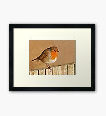 English Robin Framed Print