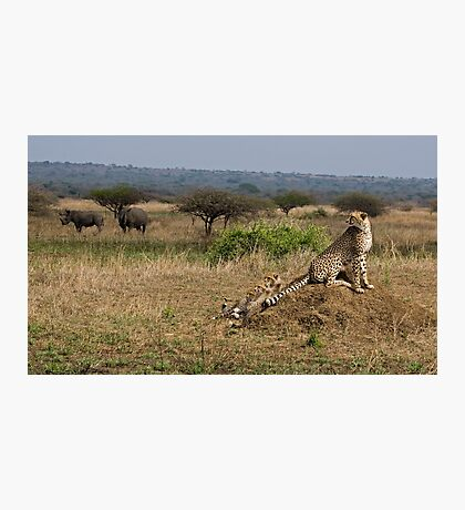 Cheetah Family And Rhinos Photographic Print