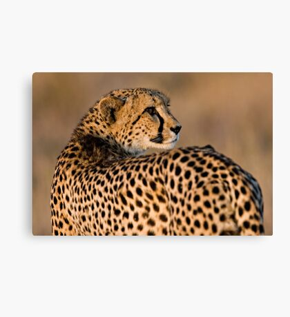 Yearning To Start The Hunt Canvas Print