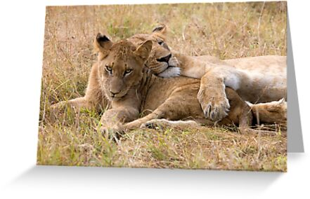 Do I Look Like A Pillow ? by Michael  Moss