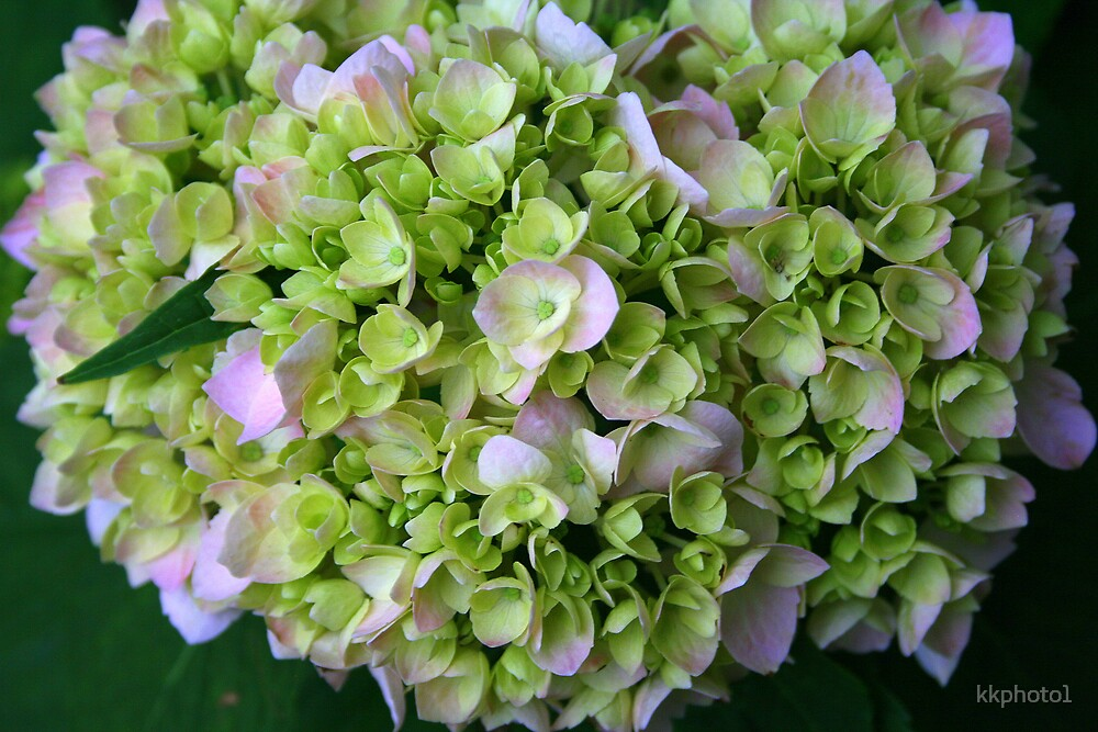 The Bouquet by kkphoto1