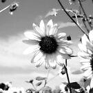 A Garden of Sunflowers by Nikki Collier