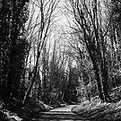 Track (B/W) by Matthew Siller