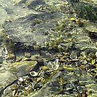 Shells in the River Danube by Ana Belaj