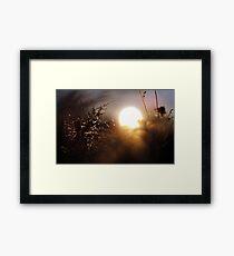Foggy Sunrise Through the Grass Framed Print