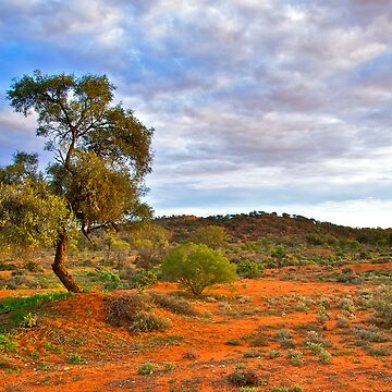 Outback of Broken Hill by RossCarroll