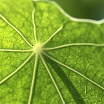 Nasturtium leaf - 2018 by gwennpaints