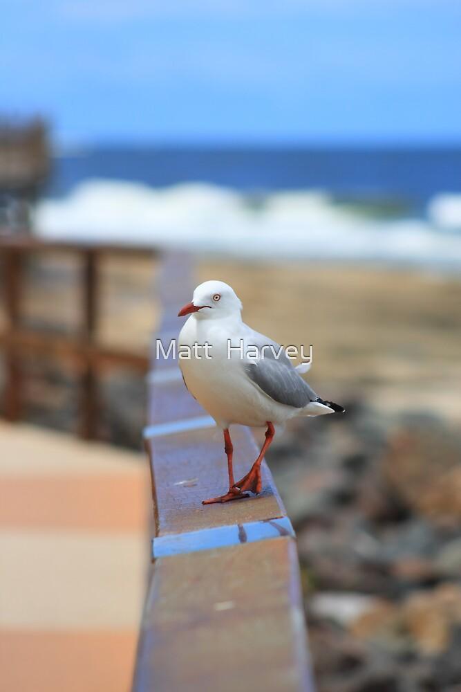 Sea Gull poser by Matt  Harvey