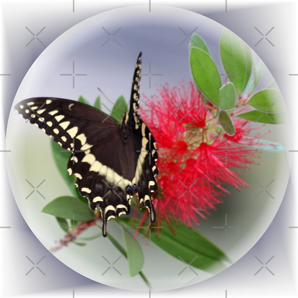 Nectar Connoissuer ll by Julie's Camera Creations <><