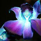 Blue Orchid by Daniel Rayfield