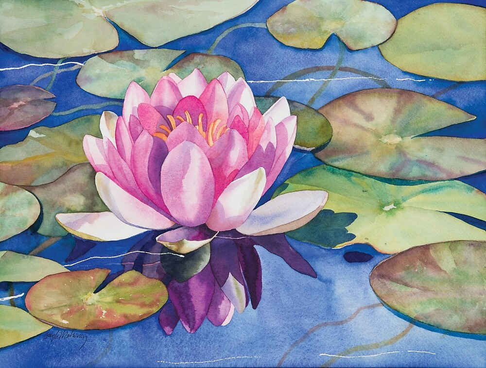 Pink Water Lily Watercolor by Gayle Mahoney