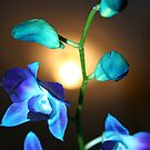 Blue Orchis stem by Daniel Rayfield