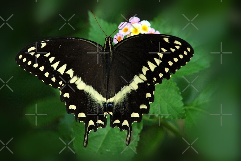 A Sip Of Nectar by Julie's Camera Creations <><