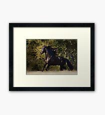 Andalusian Stallion Framed Print