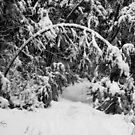 Snow Arch on Smart's Brook Trail, Thornton, NH by Wayne King