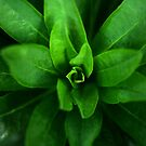 Great greeness by stellaozza