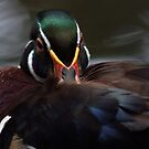 Sitting duck by richardseah