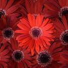 Red Flowers by southmind