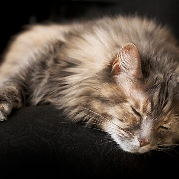 Chloe naps by LynnStarner