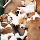 Pile Of Puppies by L.D. Franklin