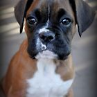 Dino's Portrait ~ Boxer Dog Series by Evita