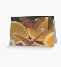 butterfies on a orange Greeting Card