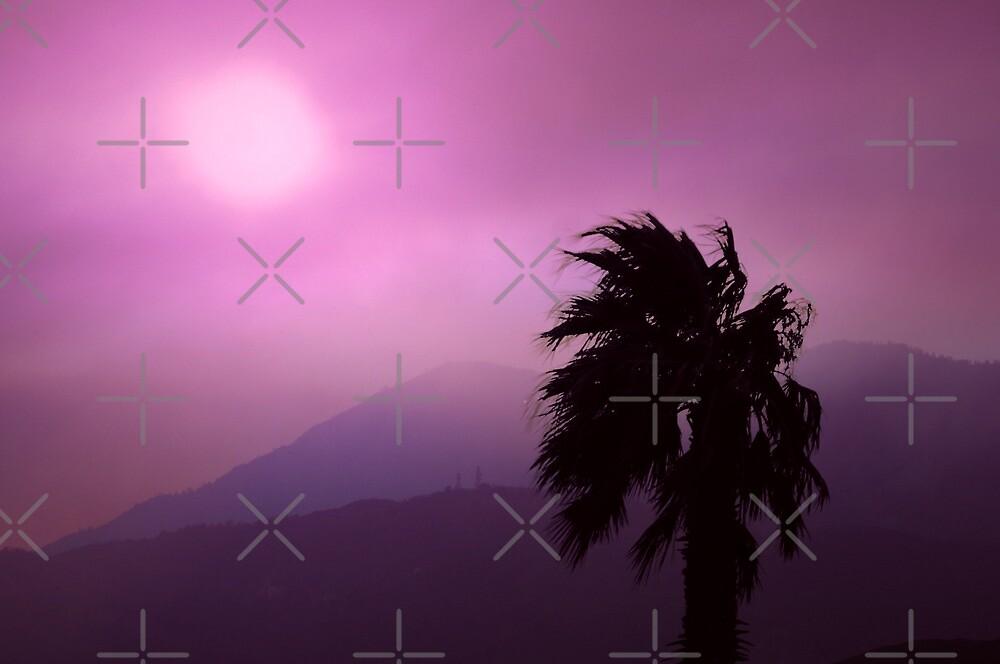 Purple Haze by CarolM