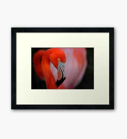 """Another """"Are You Looking At Me"""" Framed Print"""