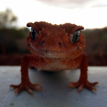 Smiling Gecko, perhaps. by mickrose