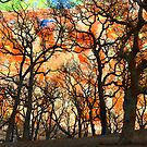 A Blessing for the Woods. by Lynne Haselden
