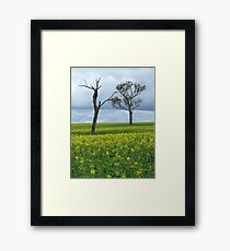 Spring Canola and Trees Framed Print