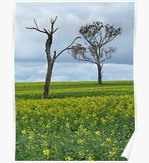 Spring Canola and Trees Poster