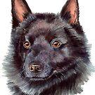Schipperke by doggyshop