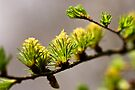 Spring shoots by Andy Freer