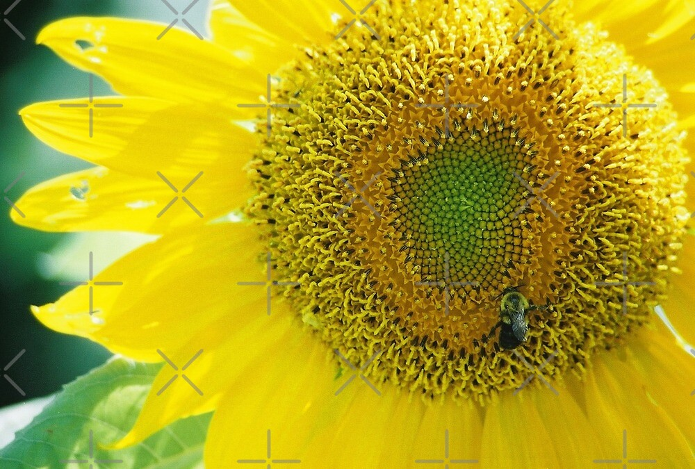 A BUZZY Sunflower by Julie's Camera Creations <><
