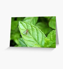 bug on a mint leaf Greeting Card