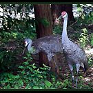 SAND HILL CRANES BRUSHSTROKES by BOLLA67