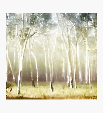 Whisper the Trees Photographic Print