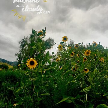 Sunshine On a Cloudy Day by donnaroderick