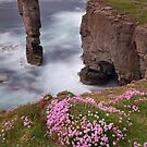 Yesnaby Castle. Summer Flowers. Orkney. Northern Isles.Scotland. by Barbara  Jones ~ PhotosEcosse